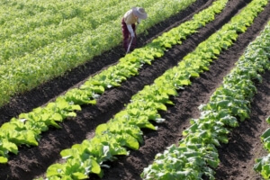 週末起業で農業を始める場合に必要なもの