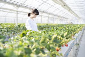 週末起業で農業を始めたい!必要な準備やおすすめ野菜について
